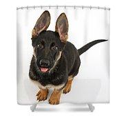 German Shepherd Puppy Shower Curtain