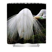 Great White Egret Preening Shower Curtain