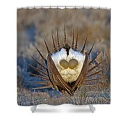 Greater Sage-grouse Shower Curtain