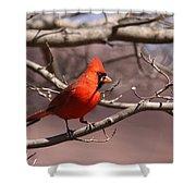 Img_0001 - Northern Cardinal Shower Curtain