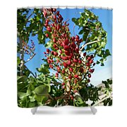 Kerman Shower Curtain