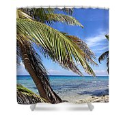 Laughing Bird Caye Shower Curtain