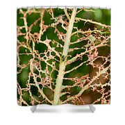 Leaf Eaten By Insects Shower Curtain
