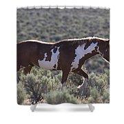 Mustang Stallion Shower Curtain