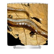 Nauta Palm Foot Salamander Shower Curtain