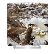 Nazca Booby In Galapagos Shower Curtain