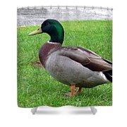 New Zealand - Male Mallard Duck Shower Curtain