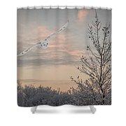 Snowy Owl Glide Shower Curtain