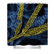 Penicillium With Spores Shower Curtain