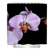 Pink Orchid IIi Shower Curtain