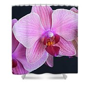 Pink Orchids Shower Curtain
