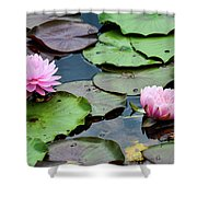 Pink Water Lily Series Shower Curtain