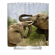 Playtime Shower Curtain