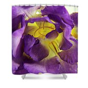 Purple Freesia Shower Curtain