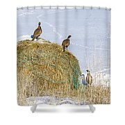 4 Roosters And A Hen Shower Curtain