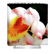 Shell Ginger Shower Curtain