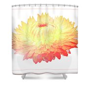 Strawflower Shower Curtain