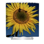 Sunflower Fields Shower Curtain