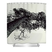 Trees And Sky Shower Curtain