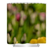 Tulips At Ottawa Tulips Festival Shower Curtain
