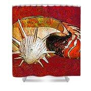 Underwater. Sea Shells. Shower Curtain