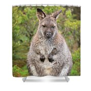 Wallaby Outside By Itself Shower Curtain