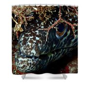 White Spotted Eel Shower Curtain