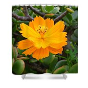 Australia - Cosmos Carpet Yellow Flower Shower Curtain