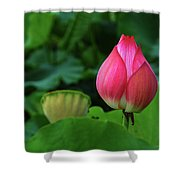 Blossoming Lotus Flower Closeup Shower Curtain