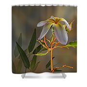 4067 Shower Curtain