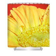 4173-001 Shower Curtain