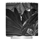 4327- Leaf Black And White Shower Curtain