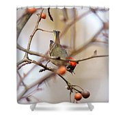 4370 - Ruby-crowned Kinglet Shower Curtain