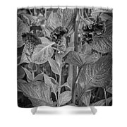 4398- Flower Black And White Shower Curtain