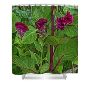4398- Flower Shower Curtain