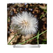 Australia - Blow And Make A Wish Flowers Shower Curtain