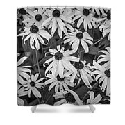 4400- Daisies Black And White Shower Curtain