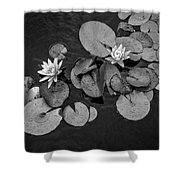 4425- Lily Pad Black And White Shower Curtain