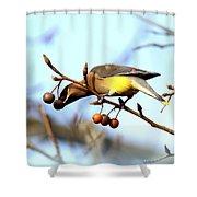 4427 - Cedar Waxwing Shower Curtain