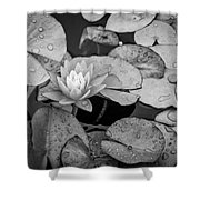 4434- Lily Pads Black And White Shower Curtain