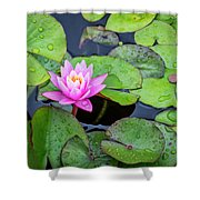 4434- Lily Pads Shower Curtain