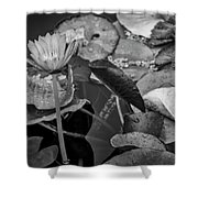 4466- Lily Pads Black And White Shower Curtain