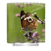 4467 - Butterfly Shower Curtain