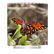 4529 - Butterfly Shower Curtain
