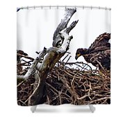 4633 Shower Curtain