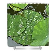 4634- Lilypad Shower Curtain