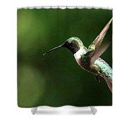 4753 - Ruby-throated Hummingbird Shower Curtain