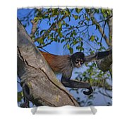 48- Capuchin Monkey Shower Curtain