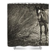 Wild Mustangs Shower Curtain