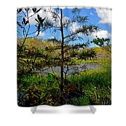 49- Florida Everglades Shower Curtain